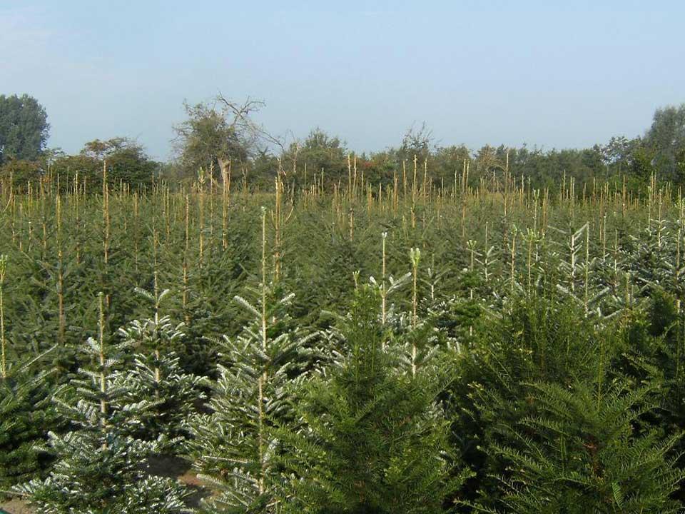 Bomen, struiken en planten advies bij A.J. van der Grift Kwekerijen in Doorn