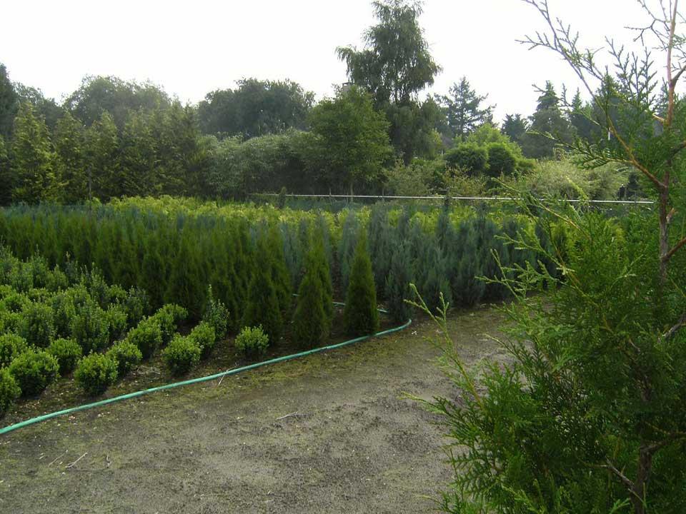 Bomen en struiken planten advies bij A.J. van der Grift in Doorn